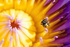 Extracción del néctar de la naturaleza Fotos de archivo libres de regalías
