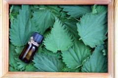 Texture of green fresh nettle leaves in a frame stock photo