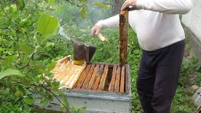 Extract cells with honey from the hive. stock footage