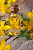 Extract from the flowers of St. John's wort macro vertical Royalty Free Stock Image