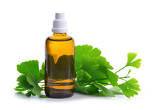 Extract from the ginkgo in bottle with green leaves. Royalty Free Stock Images