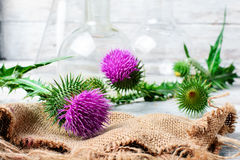 Extract from medicinal plants Stock Photos