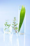 Extract of plants. Natural chemistry. Royalty Free Stock Images