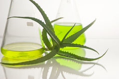 Extract of plants. Natural chemistry. Royalty Free Stock Photos