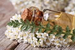 Extract of yarrow in a bottle with flowers on the table Stock Image