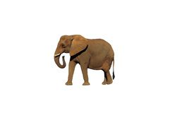 Extracted elephant 1. A picture of an extracted elephant and placed on a white background Stock Image