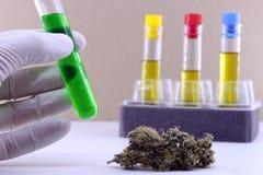Extractie van cannabisolie in het laboratorium stock afbeelding