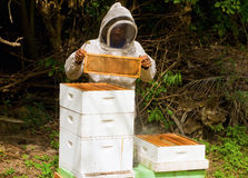 Extracting honey at an apiary on bequia Stock Photo