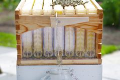 Extracting honey from beehive Royalty Free Stock Image