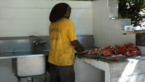 Extracting lobster meat in the caribbean stock video footage