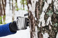 Extraction of birch SAP Royalty Free Stock Photos