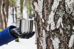 Extraction of birch SAP Stock Image