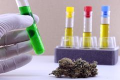 Extraction of cannabis oil in the laboratory stock image