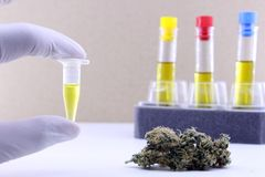 Extraction d'huile de cannabis photographie stock libre de droits