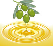 Extraction of olive oil stock illustration