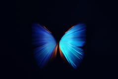 Extracto azul de la mariposa con el zoom Imagenes de archivo