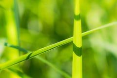Extracto borroso de la hoja verde en luz del sol Imagenes de archivo