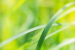 Extracto borroso de la hoja verde en luz del sol Foto de archivo