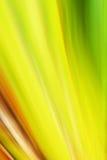 Extracto colorido Fotos de archivo