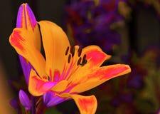 Extracto colorido de la abeja de la flor Imagen de archivo