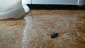 Extracto con el insecto Imagen de archivo libre de regalías