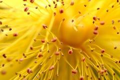Extracto de la flor fotos de archivo libres de regalías