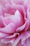 Extracto de la flor Fotografía de archivo