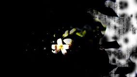 Extracto de la flor Fotos de archivo