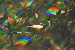Extracto de la fotosíntesis de la planta Imagenes de archivo