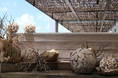 Extracto de la madera de deriva y de las plantas foto de archivo libre de regalías