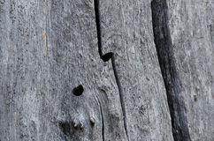 Extracto de la naturaleza – madera naturalmente resistida fotografía de archivo