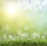 Extracto de la primavera o del calor del verano fotografía de archivo libre de regalías