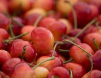 Extracto de las cerezas Foto de archivo
