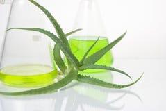 Extracto de plantas. Química natural. Fotos de archivo libres de regalías