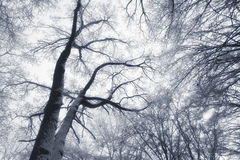 Extracto del bosque del invierno imagen de archivo