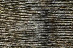 Extracto del ejemplo Textura envejecida del árbol Fondo libre illustration