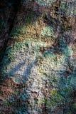 Extracto del fondo áspero de la corteza de árbol imágenes de archivo libres de regalías