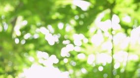 Extracto del fondo verde hermoso borroso de la naturaleza del bokeh metrajes