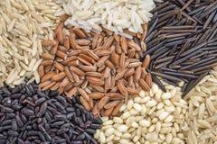 Extracto del grano del arroz Fotos de archivo libres de regalías