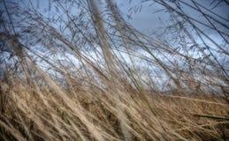 Extracto del primer de la hierba larga de Islandia en otoño Fotografía de archivo libre de regalías