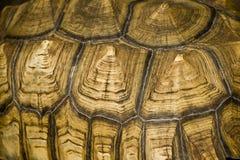 Extracto del shell de Tortise Fotografía de archivo libre de regalías