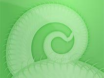 Extracto espiral de las frondas que remolina Imagen de archivo