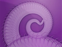 Extracto espiral de las frondas que remolina Fotografía de archivo
