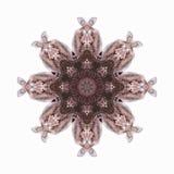 Extracto gris del pelícano Imagen de archivo libre de regalías