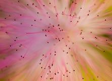 Extracto macro de la flor foto de archivo