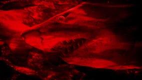 Extracto peligroso de la sangre del terror del tiburón almacen de metraje de vídeo
