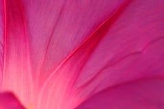 Extracto rosado del pétalo fotografía de archivo libre de regalías