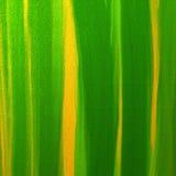 Extracto verde y amarillo Fotos de archivo