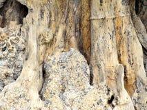 Extrahieren Sie das alte Holz in der natürlichen, nahen hohen Oberfläche und in der Beschaffenheit des Holzes Lizenzfreies Stockfoto