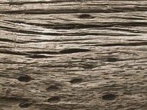 Extrahieren Sie das alte Holz in der natürlichen, nahen hohen Oberfläche und in der Beschaffenheit des Holzes Stockbild